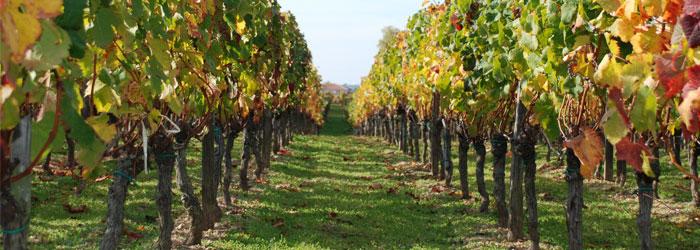 Vin du Coteaux Lyonnais