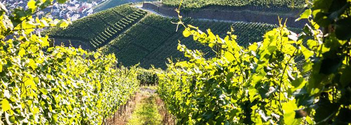 Vin du Rhône